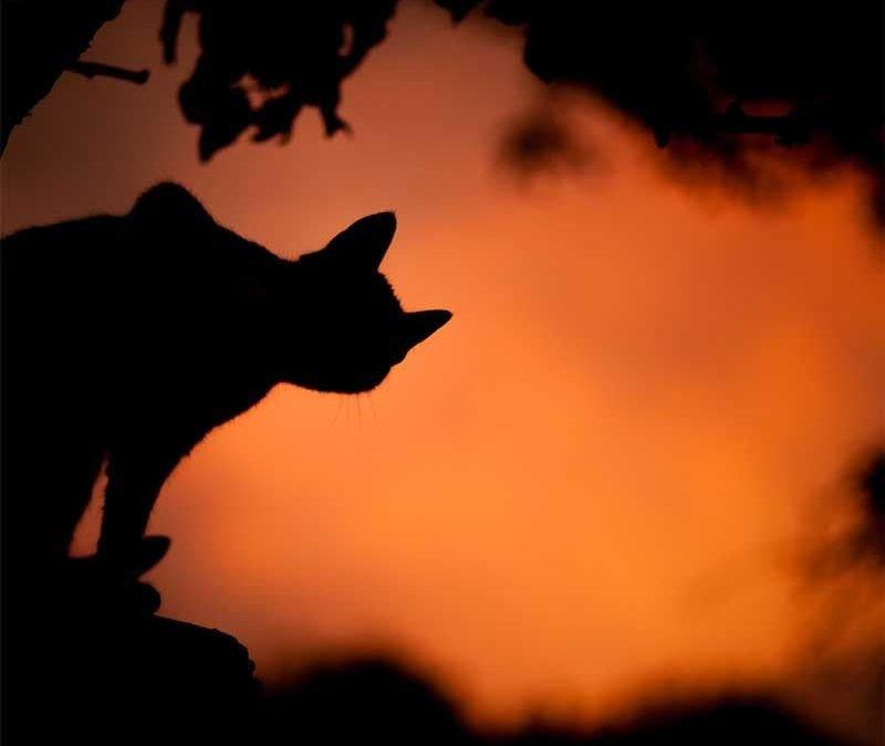 black cat on orange sky