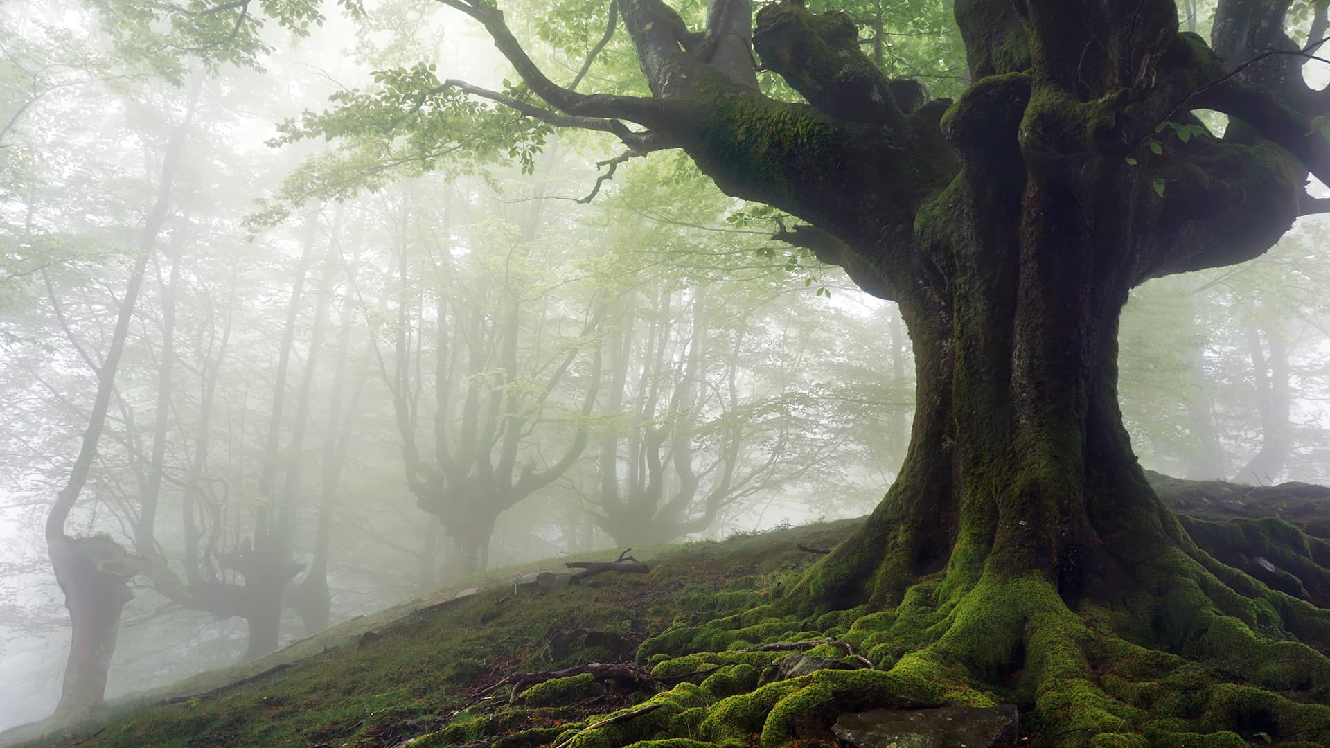tree in foggy forest