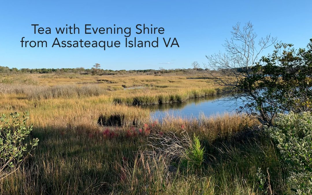 Marshland from Assateague Island