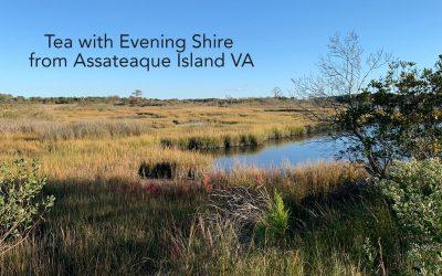 Tuesday Tea with Evening Shire – High Mountain Oolong Tea